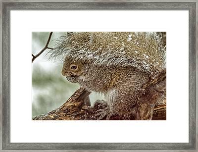 Mammals Framed Print featuring the photograph Winter Squirrel by LeeAnn McLaneGoetz McLaneGoetzStudioLLCcom