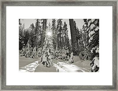 Winter Wonderland - Badger Pass In Yosemite National Park Framed Print by Jamie Pham