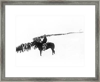 Wintertime Cattle Drive Framed Print by Charles Belden