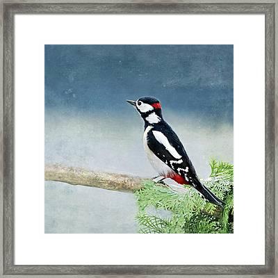 Woodpecker Framed Print by Heike Hultsch