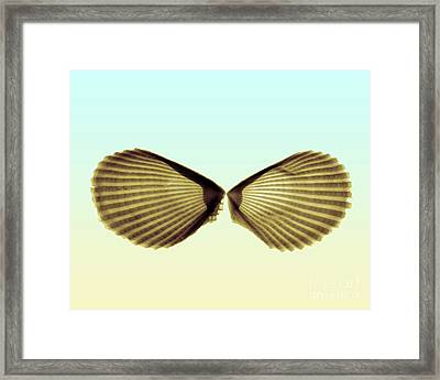X-ray Of Angel Wing Shells Framed Print by Bert Myers