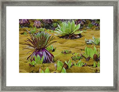 Young Giant Lobelias And Giant Framed Print by Martin Zwick