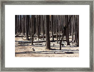 Forest Fire Framed Print by Ashley Cooper