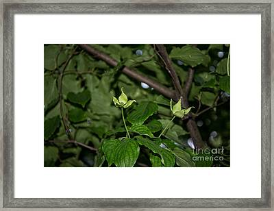 Forest Hill Gardens In Queens Framed Print by Carol Ailles