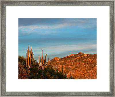 Saguaro Cactus Carnegiea Gigantea Framed Print by Panoramic Images