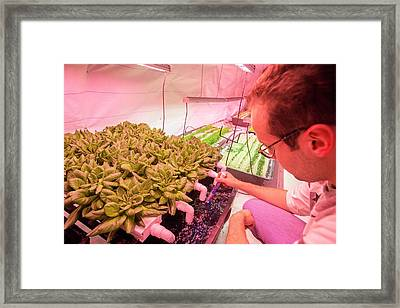 Underground Horticulture Framed Print by Louise Murray