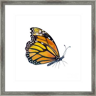 103 Perched Monarch Butterfly Framed Print by Amy Kirkpatrick