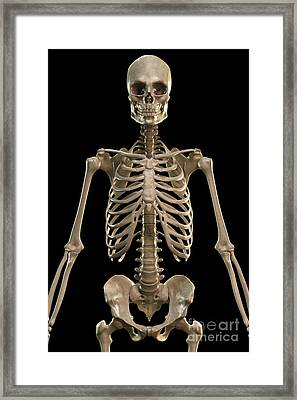 Bones Of The Upper Body Framed Print by Science Picture Co