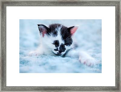 Spotted Black And White Kitten Framed Print by Iris Richardson