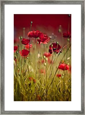 Summer Poppy Framed Print by Nailia Schwarz