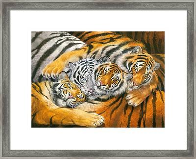 Tiger Hug Framed Print by John Francis