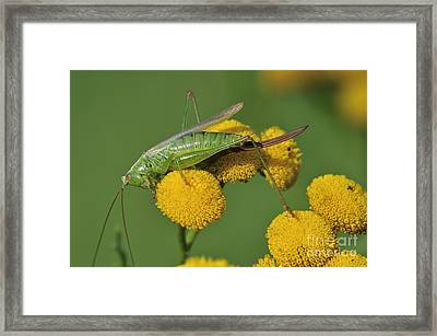 110221p245 Framed Print by Arterra Picture Library