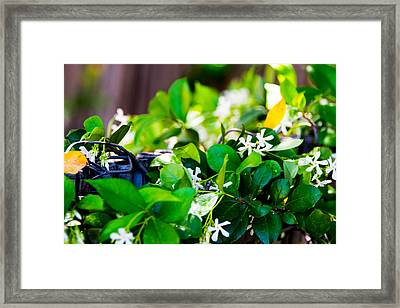 Amore Framed Print by Marit Runyon