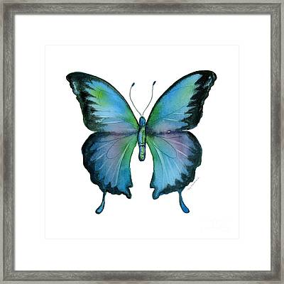 12 Blue Emperor Butterfly Framed Print by Amy Kirkpatrick