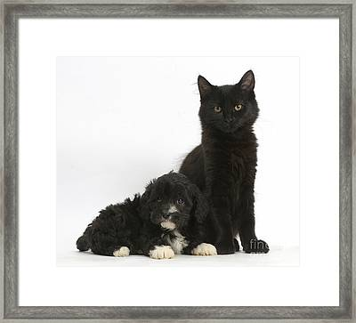 Kitten And Puppy Framed Print by Mark Taylor