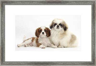 Puppies Framed Print by Mark Taylor