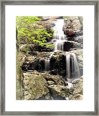 1201 Framed Print by Marty Koch