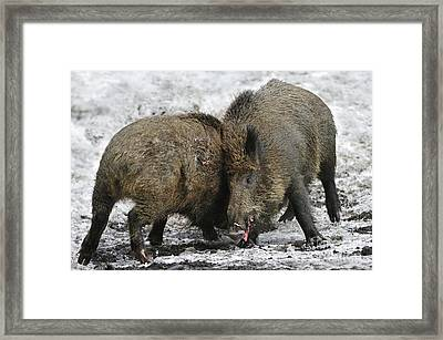 120223p302 Framed Print by Arterra Picture Library