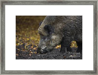 121213p269 Framed Print by Arterra Picture Library