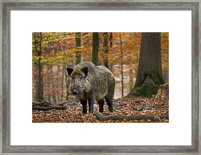 121213p283 Framed Print by Arterra Picture Library