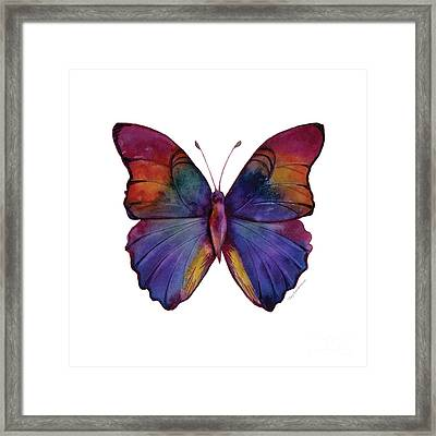 13 Narcissus Butterfly Framed Print by Amy Kirkpatrick