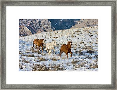 North America, Usa, Wyoming, Shell Framed Print by Terry Eggers