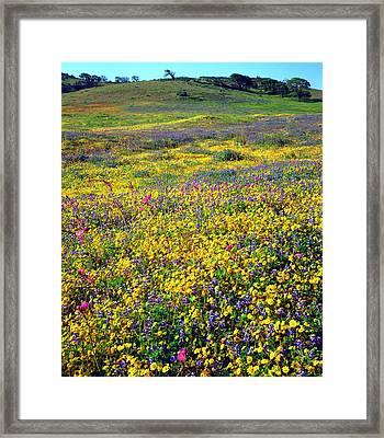 Usa, California, Cuyamaca Rancho State Framed Print by Jaynes Gallery