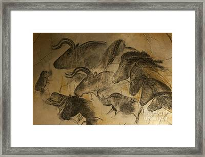 131018p051 Framed Print by Arterra Picture Library