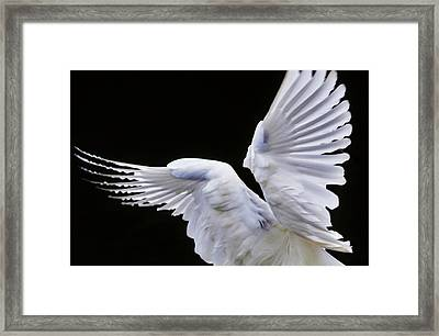 Wings Framed Print by Paulette Thomas