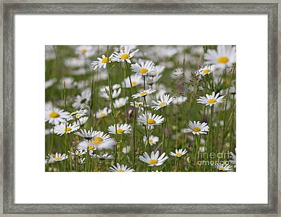 141020p304 Framed Print by Arterra Picture Library