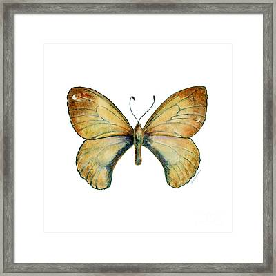 15 Clouded Apollo Butterfly Framed Print by Amy Kirkpatrick