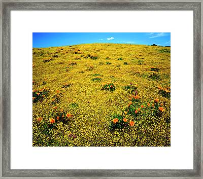 Usa, California, Cleveland National Framed Print by Jaynes Gallery