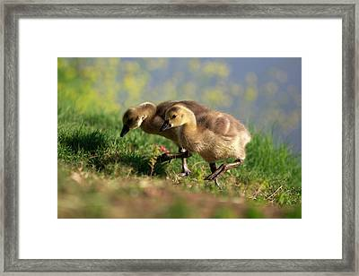 Usa, California, San Diego, Lakeside Framed Print by Jaynes Gallery