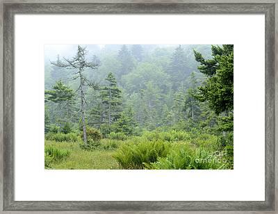 Cranberry Glades Botanical Area Framed Print by Thomas R Fletcher