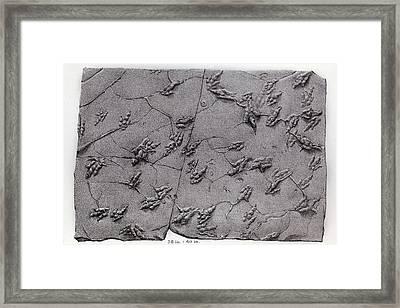 1858 Dinosaur Tracks Ichnology Hitchcock Framed Print by Paul D Stewart
