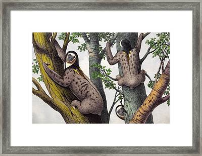 1860 Human Faced Sloths Framed Print by Paul D Stewart