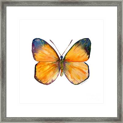 19 Delias Anuna Butterfly Framed Print by Amy Kirkpatrick