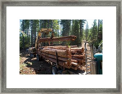 Logging Redwood Trees Framed Print by Jim West