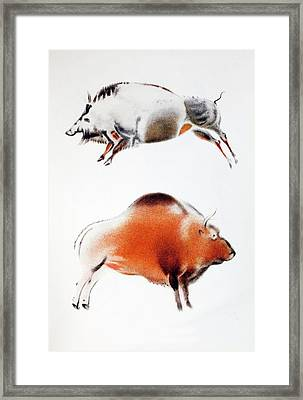 1916 Breuil Bison Boar Cave Painting Framed Print by Paul D Stewart