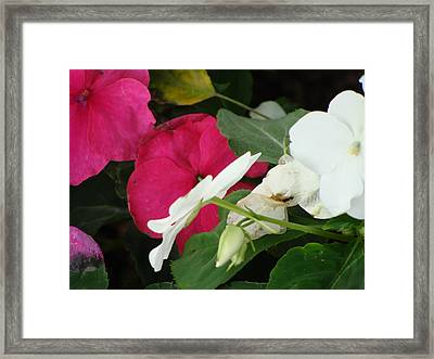 A Quiet Place Framed Print by Ira Shander