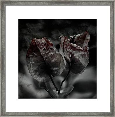 Abrasion Framed Print by David Fox