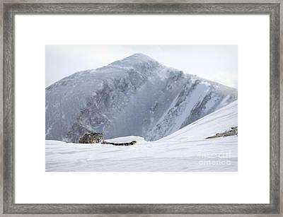 Absolute Solitude Framed Print by Wildlife Fine Art
