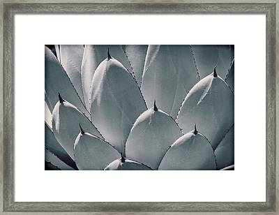 Agave Leaves Framed Print by Kelley King