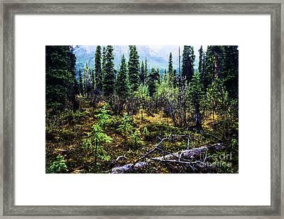 Alaska Mountain Range Wilderness Framed Print by Thomas R Fletcher