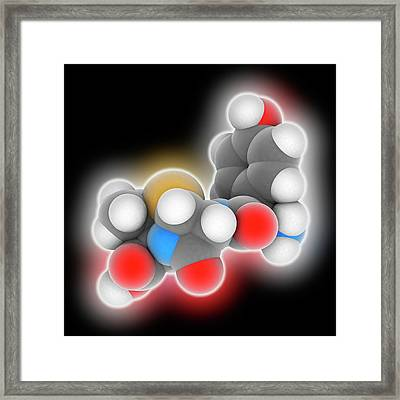 Amoxicillin Drug Molecule Framed Print by Laguna Design
