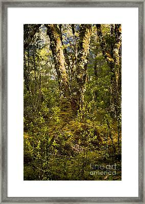Ancient Woods Framed Print by Tim Hester
