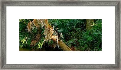Anhinga Anhinga Anhinga On A Tree Framed Print by Panoramic Images
