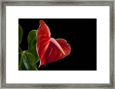 Anthem Framed Print by Doug Norkum