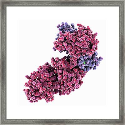 Anthrax Oedema Factor Molecule Framed Print by Laguna Design