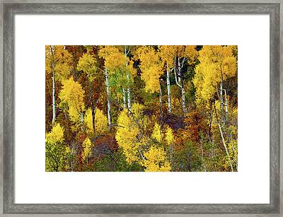 Aspens In Autumn, Zion National Park Framed Print by Michel Hersen